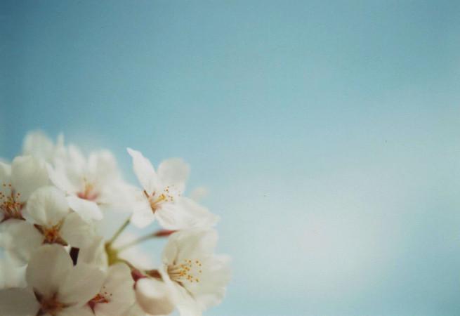 春の陽ざし やわらかなはじまり