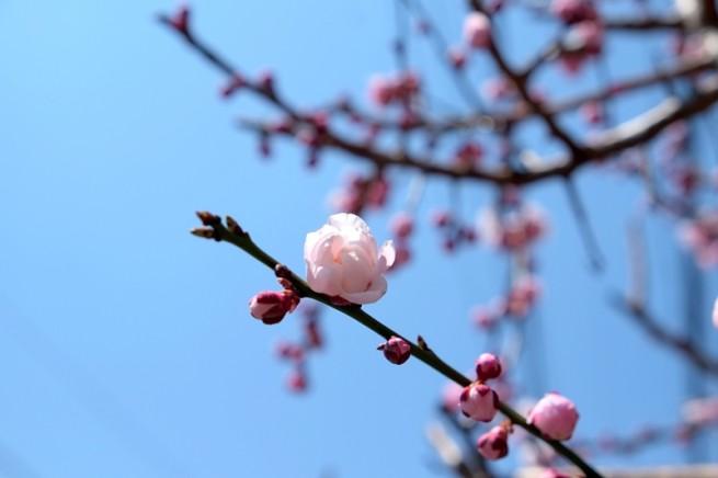 命がひらくと 境界線が消える 花がすべてを 包んでくれる
